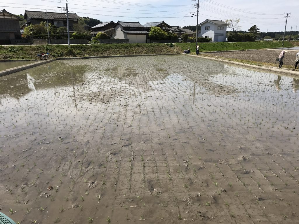 The finished rice paddy after planting!!